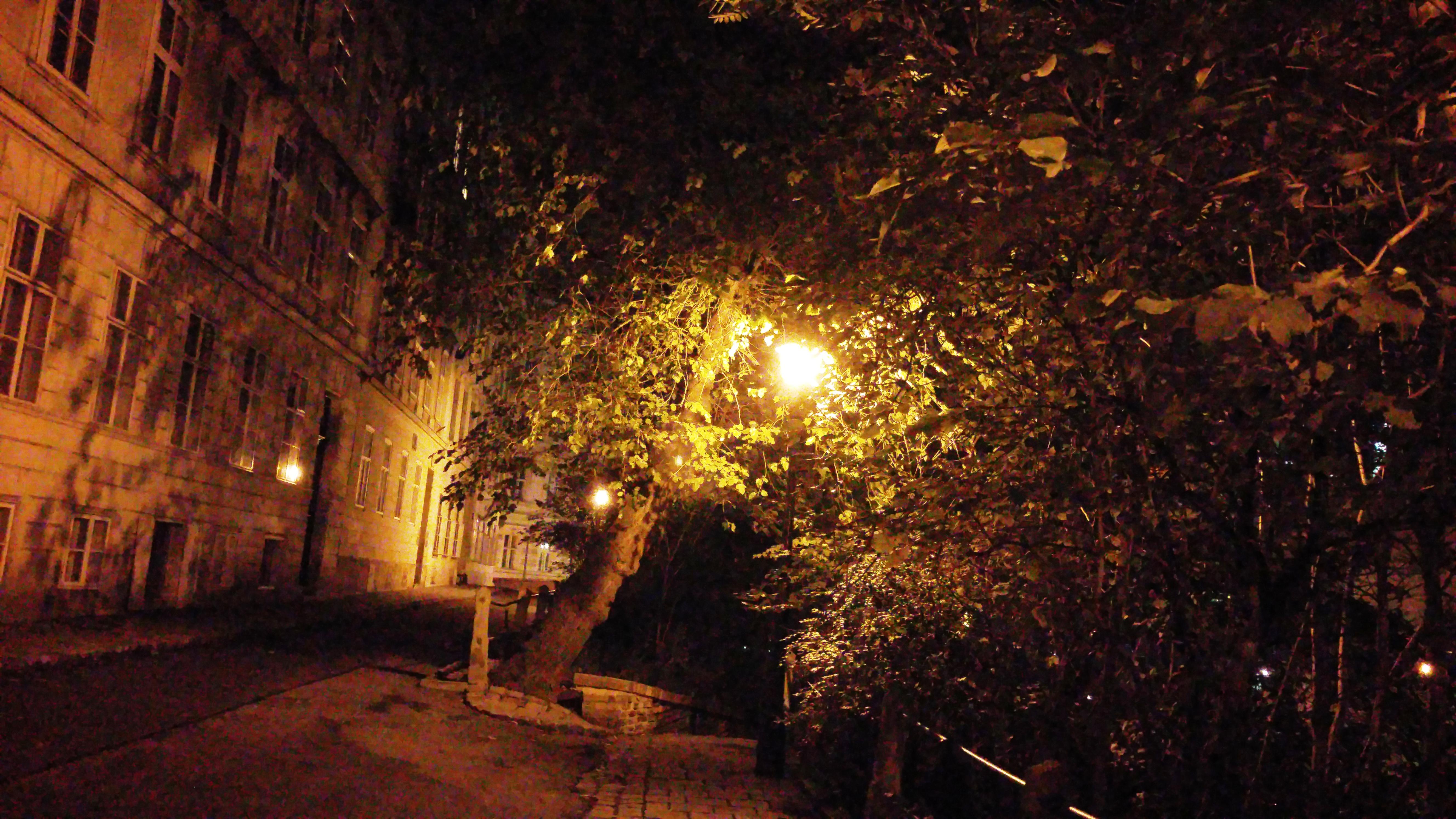 Nachts in Wien - unterwegs mit Manfred Chobot